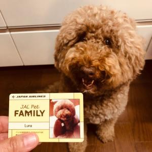 JAL Pet FAMILY