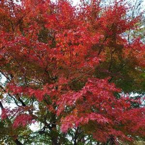 11月上旬の森と木製オブジェ~11月の森③