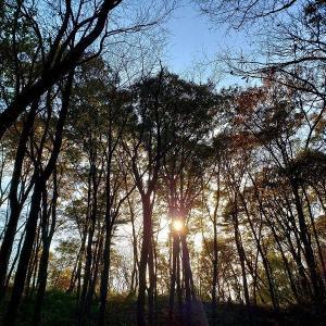 美しいもの~11月の森④