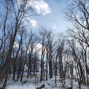 雪・1月の森(ひたすら画像)
