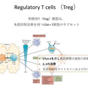 制御性 T 細胞(Regulatory T cells)(1)