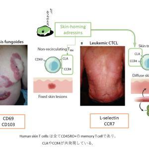 Resident memory T cell(2)