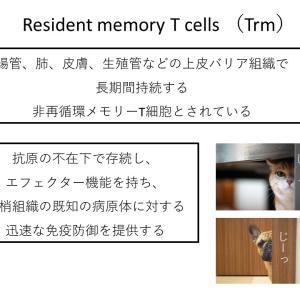 Resident memory T cell(1)