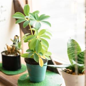 観葉植物とフェイクグリーン。それぞれのメリット/デメリット。