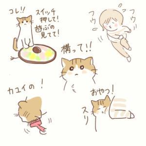 甘えてくるおネコ かまって!