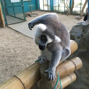 東北サファリパークで動物たちに癒されましょう!(福島県二本松市)
