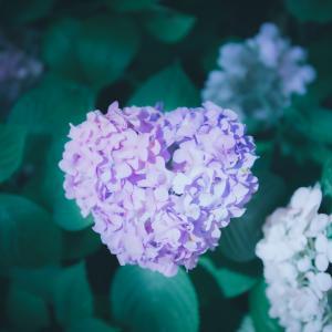 【BASE】LightroomプリセットFlower【花や風景に】