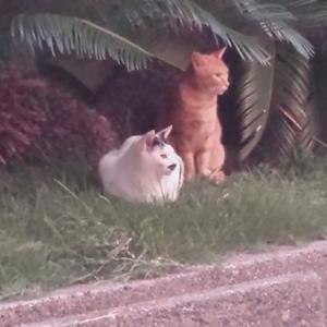 西天満の猫たち。大阪市の地域猫活動を応援しています!