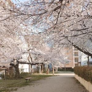 【2021年】滝川公園の桜フォト