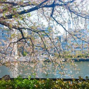 【2021年】南天満公園の桜フォト