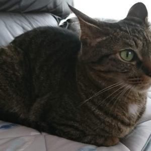 猫を飼い始めたら変えていきたい生活習慣。脱走、怪我、誤飲誤食を防ぐために