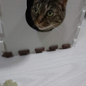 猫は飼い主の言葉をどこまで理解しているのでしょうか?