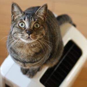 猫のニオイは気になる?来客時におすすめのお部屋の脱臭方法