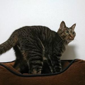 猫は毎日ウンチするのでしょうか?飼い猫で頻度を検証してみました