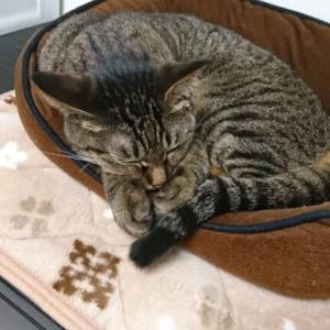 猫は夢を見る?寝ぼけて歩き回る新たなルーティンを発見