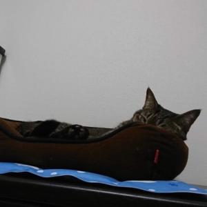 夏用ベッドで寝てくれない!こだわりの強い猫のための夏の暑さ対策