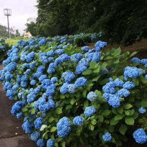 福島市松川町の土合舘公園