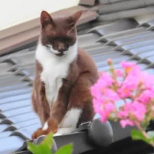 「猫も滑ると屋根から落ちる」