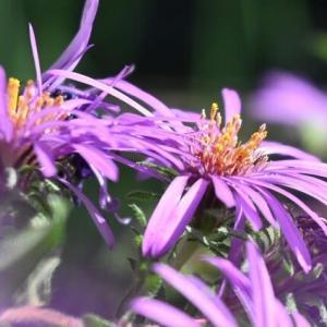 思い出の花 満開