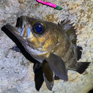 釣れる時は何しても釣れるんです🎣‼️