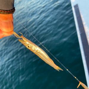 海中に数千匹?釣りだけど、もはや漁でしょ!