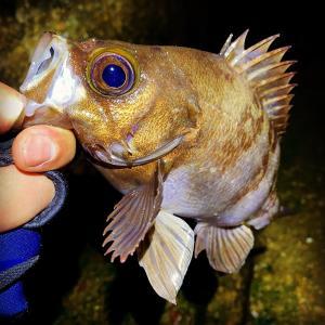 メバル釣りでの時合と止め時の見極めタイミング