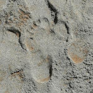 フランスの海 – 砂浜や砂利浜を裸足で歩く