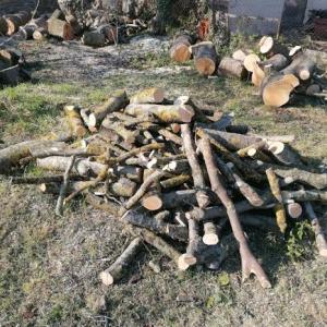 境界線上にある共有の木を伐採 フランスの民法を知る!