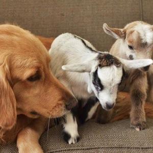 犬の愛情は深いと感じさせる2つのエピソード