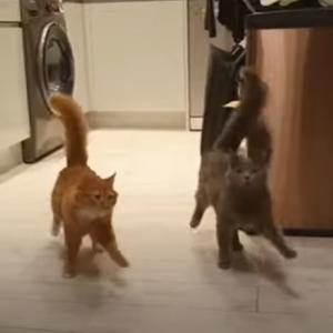 驚異のシンクロ率!餌を食べに行く2匹の猫