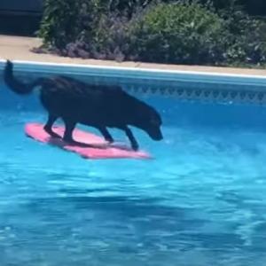 水遊びに興じる犬たち