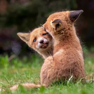 フィンランドの写真家による、動物の赤ちゃんの愛らしい仕草の写真