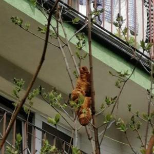 ポーランドで自宅前の木に変な動物がいると通報、正体は!?