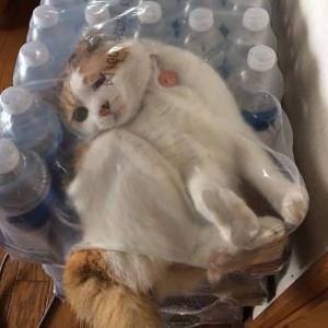 にゃんて所に猫さんが!? 想像もつかない場所に居る42匹の猫たち パート3