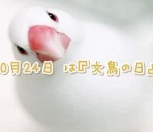 「文鳥の日」