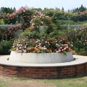 中之条ガーデンズ2020 #3 乙女チックなピンクのガーデン
