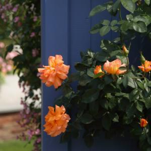 中之条ガーデンズ2020 #4 ビビッドカラーのローズガーデン