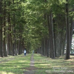 長い並木道