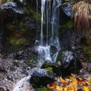 しっとりと色づく秋 - 照葉峡 ② -