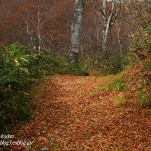 落ち葉の道 -照葉峡 ⑥ -