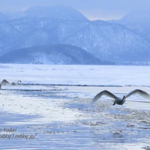 白鳥の湖 #2