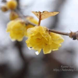 春を呼ぶ雪