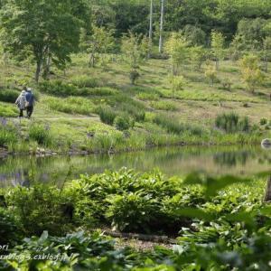 6月の中之条ガーデンズ 2021 #7 「ふる里の野山」など