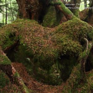 森のもののけ達