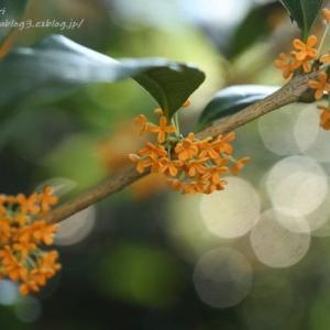 漂う秋の香