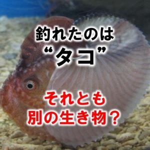 """釣れたのは貝殻に入った""""タコ""""…それとも別の生き物?"""