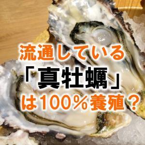 流通している「真牡蠣」は100%養殖?