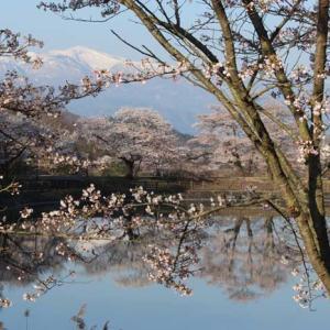 福島県でおすすめの結婚相談所ランキング!郡山や福島市で人気なのはどこ?