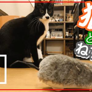 ねずみと遊ぶ猫はこちらです...