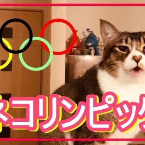 ネコリンピックを目指す猫はこちらです...